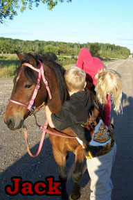 Photo: Horses available for pony rides