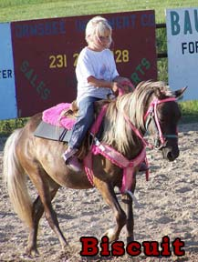 Photo: pony rides horse named Biscuit
