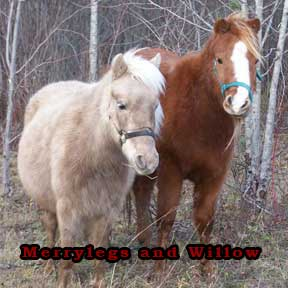 Photo: Merrylegs and Willow, our horses