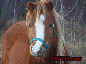 Photo: Willow the Horse